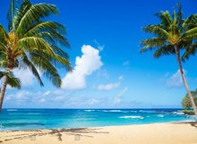 coconut palm tree on sandy beach Backgrounds for sale  Vinyl cloth High quality Computer printed hawaii backdrop