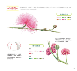 Image 2 - Used Chinese Color Pencil Drawing Nature Plant Flower Succulents Art Painting Book