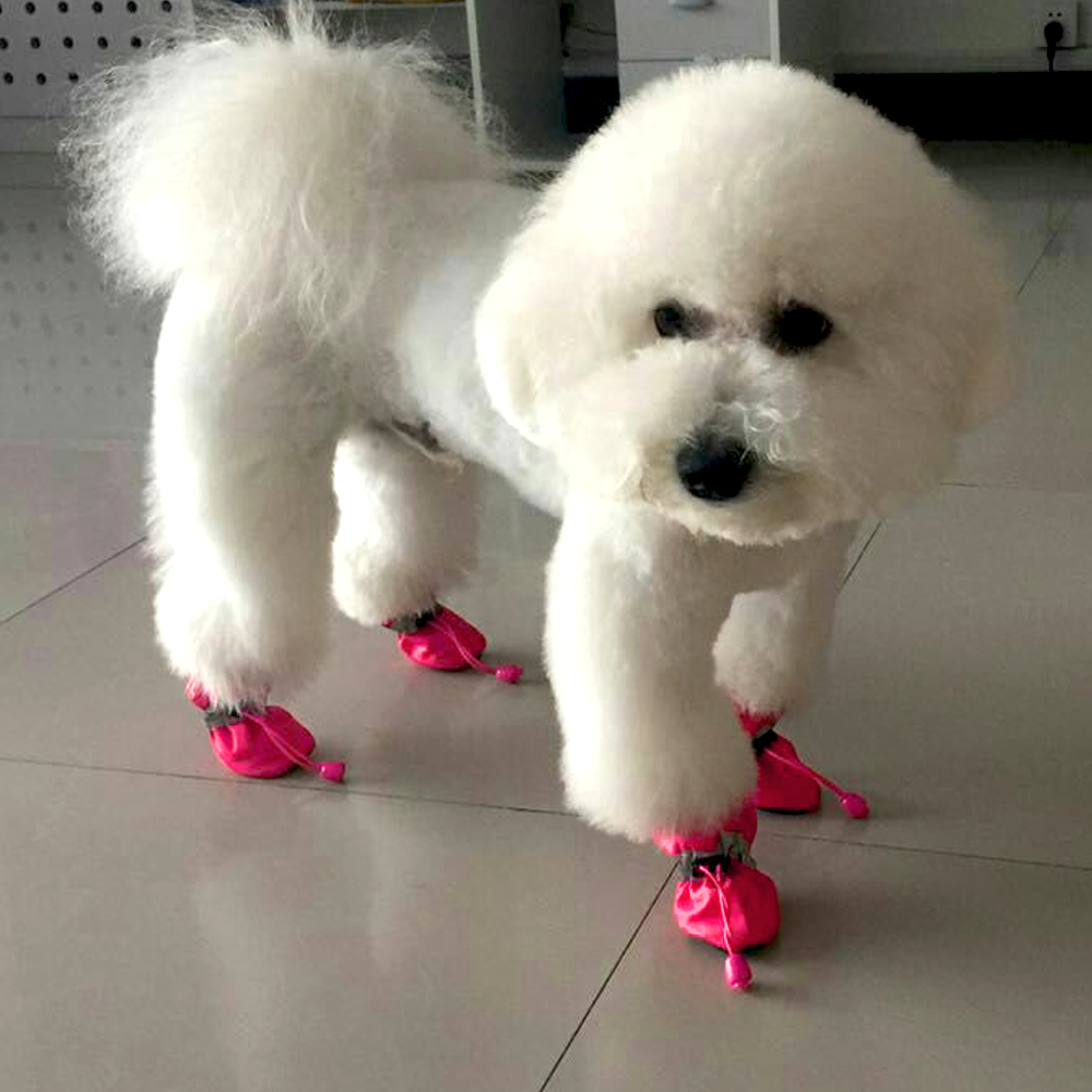 little dog boots
