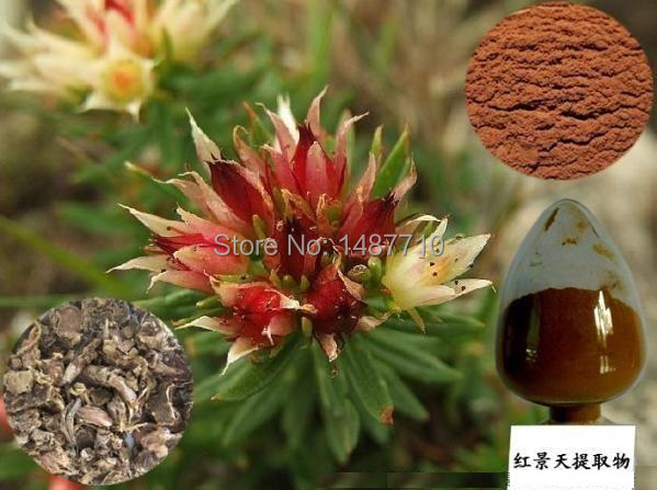1kg free shipping 100% Nature Rhodiola Rosea Extract 3% Rosavins HPLC