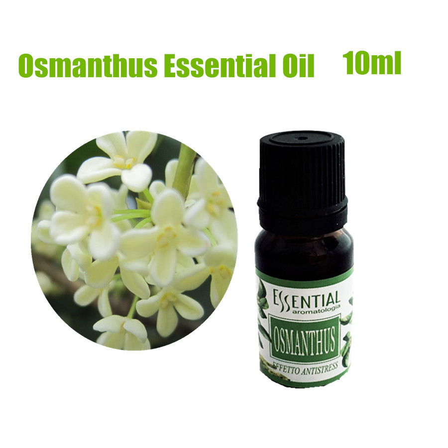 Pure Natural Osmanthus Essential Oil Extract Massage Air Freshener Beauty Salon Pedicure Spa 10ml