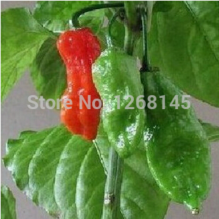 Home & Garden Cheap Sale 10pcs Shu Over 1,000,000 Red Bhut Jolokia The Hottest Pepper In The World India Ghost Pepper Careful Calculation And Strict Budgeting