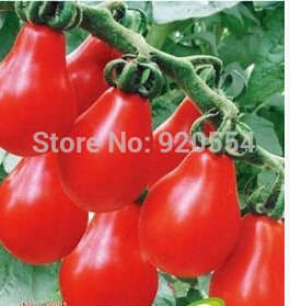 Indoor Tomato Plants Promotion Shop for Promotional Indoor Tomato