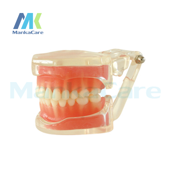 Manka Care - Removable Model/28pcs Tooth/Soft Gum/Without screw Oral Model Teeth Tooth Model 2017 teeth whitening oral irrigator electric teeth cleaning machine irrigador dental water flosser professional teeth care tools