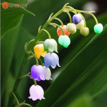 Balcony Potted Flowers Convallaria Majalis Colorful Lily of the Valley Orchid Seeds 100 Particles / lot