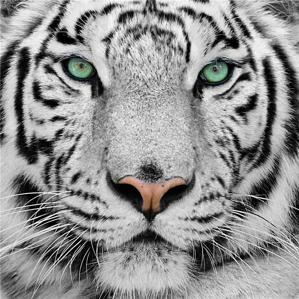 Toko Online Gratis Pengiriman Photowall Putih Harimau Hitam Dan
