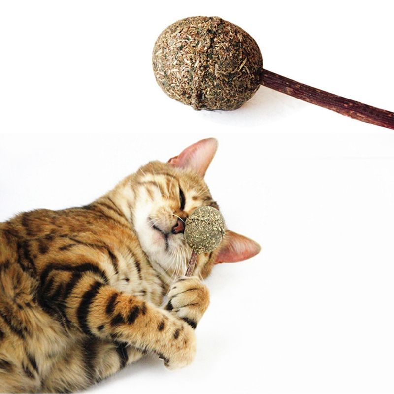US $1 74 19% OFF|Cats Toys Tease Catnip Lollipops Natural Sticks for  Cleaning Teeth Silvervine Catnip Candy Ball Toys For A Cat-in Cat Toys from  Home