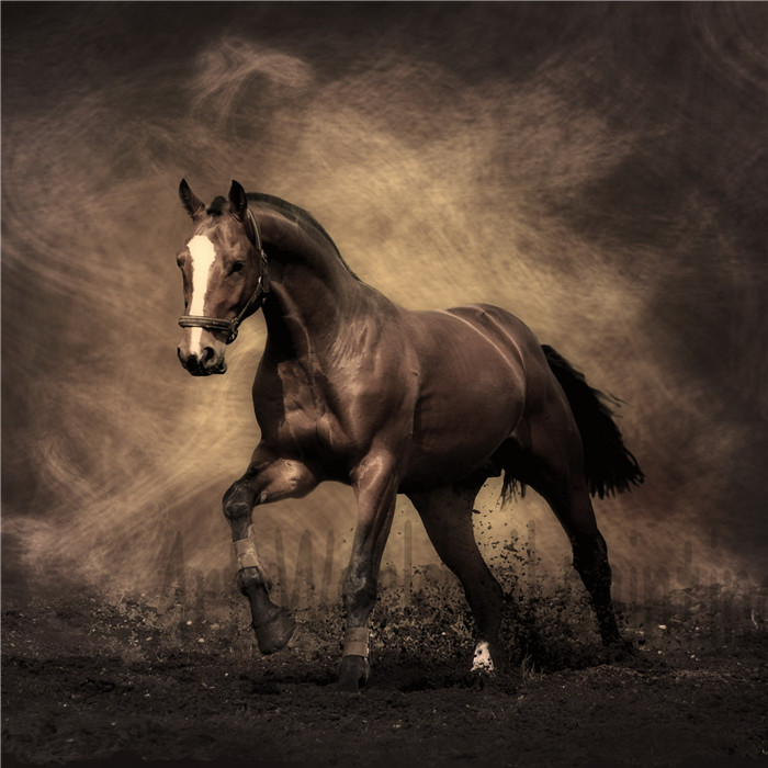 Modern animal oil painting canvas wall art painted Larry Brown horse walking <font><b>elegant</b></font> living room bedroom <font><b>home</b></font> <font><b>decor</b></font> 002