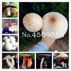 100 шт. и ни в коем случае гриб бонсай забавные суккуленты съедобные полезные овощи 25 видов грибов растений для Happy Farm Бесплатная доставка