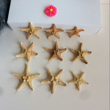 10Pcs/set Sea Star Fish Animal Shell Beach Ornament for Aquarium Weddings Party DIY Home Decoration Craft 3-4cm starfish