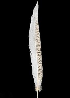 """50 шт./лот 12-1"""" 30-35 см Красивые хвостовые перья из Серебряный фазан"""