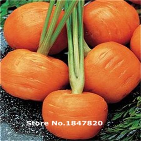 New Rare Carrot seeds Parisian Market – 200 vegetable Seeds