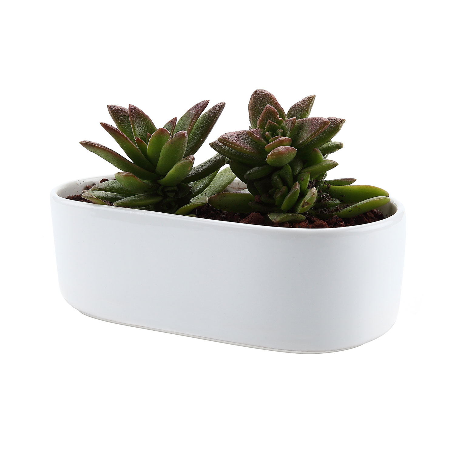 Cactus Planting Pots Us 16 71 20 Off T4u 6 5 Inch Ceramic White Modern Oval Design Succulent Cactus Plant Pot Flower Pot Container Planter In Flower Pots Planters From