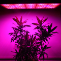 600W LED Grow Light Full Spectrum UV+IR AC85~265V Aviation Aluminum High Efficiency For Flowering Plant and Hydroponics System