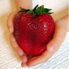 1000 PCS Big Giant Strawberry  Rare Sweet Four-season vegetable and fruit plant tree Garden plants