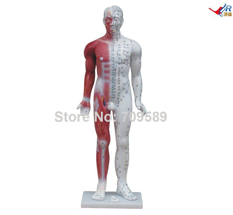 84CM Human Acupuncture Model