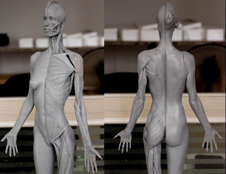 Human Body Model 60cm Female Muscle Anatomy Painting Model Grey In