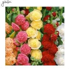 500pcs/lot Althaea rosea Bonsai Flower DIY Garden Pots Flowers Plants For Home Decorations Planting Planters Pot