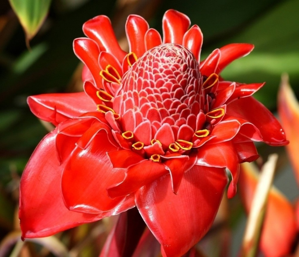 Pictures of exotic flowers and plants savingourboysfo popular red exotic flowersbuy cheap red exotic flowers lots from beautiful flower izmirmasajfo