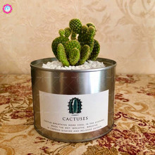 1pcs Cactus Plants with Flower Pot Indoor Bonsai Potted Succulents Office Study Radiation Protection