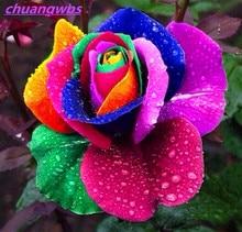 100pcs plants Rare Holland Rainbow Rose Flower Lover Multi-color Plants Home Garden rare rainbow rose flower