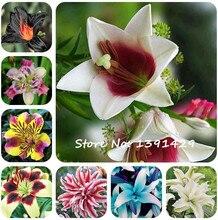 2 Pcs 100% True Lily Bulbs, Perfume Lily Flower,(not Lily Seeds), Flower Lilium Bulbs, Bonsai Pot Plant for Home Garden