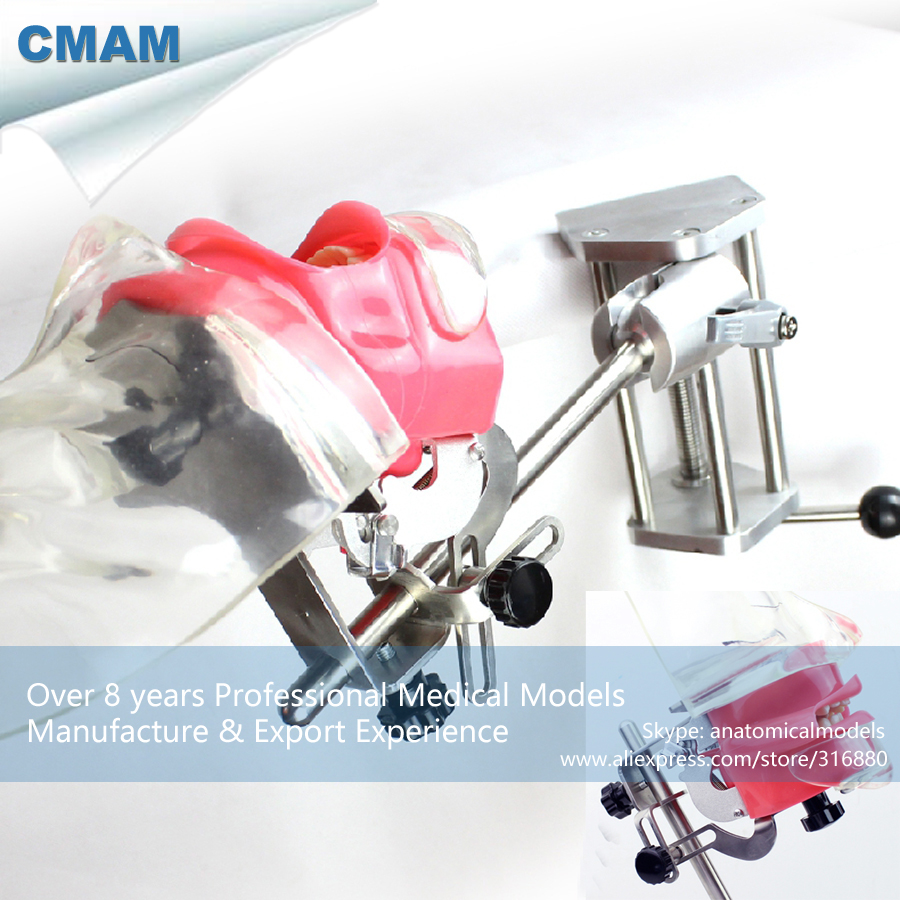 12561 CMAM-DENTAL02-2 Table Phantom Head Tooth Prepare Practice Model dental phantom head dental phantom phantom