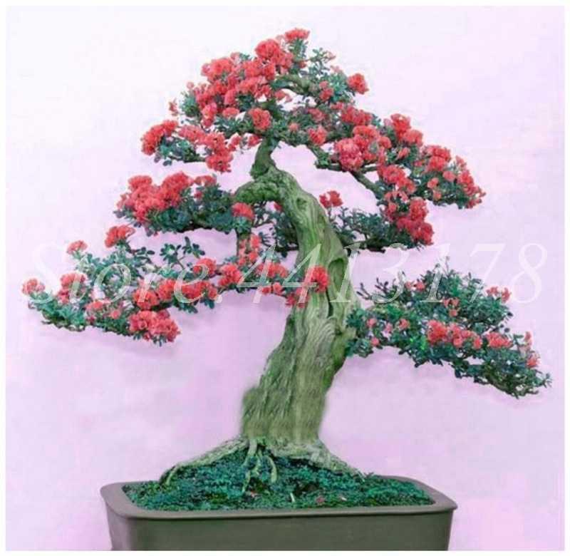 100 шт./пакет карликовые деревья Сирень японский (очень ароматный) гвоздики цветок в горшке сиреневые деревья открытый завод для дома садовый декор