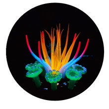 Aquarium Decoration Simulation sea anemone Luminous Coral Ornament Water grass Fish tank Landscape Aquatic Supplies product