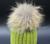 Mujer Y Hombre espesar invierno Cálido de piel Bola de Pelo de Punto sombrero
