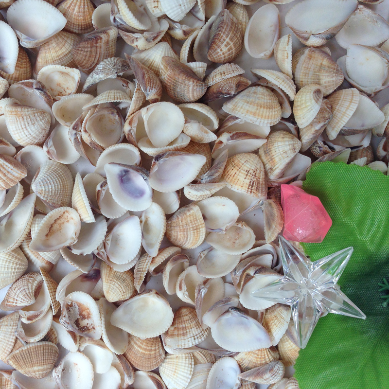 HappyKiss 30pcs/lot Natural Shell Grey Shell Sallei Fish Tank Yangtz Aquarium Decoration Diy Sea Fish