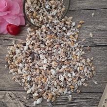 50pcs 0.9-1.3cm Small Miscellaneous Conch Home toys Decoration Material Natural Craft Seashell Aquarium Fish Tank Landscape