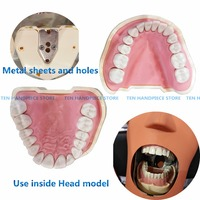 2018 Dental Soft Gum Teeth Model Removable 28pc/32pc Teeth NISSIN 200 KAVO head model Compatible dentist teaching learning