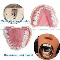 2018 Dental Soft Gum Teeth Model Removable 28pc/32pc Teeth NISSIN 200 KAVO head model Compatible dentist teaching learning