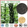 GMP black sesame seeds extract powder sesamin 200g