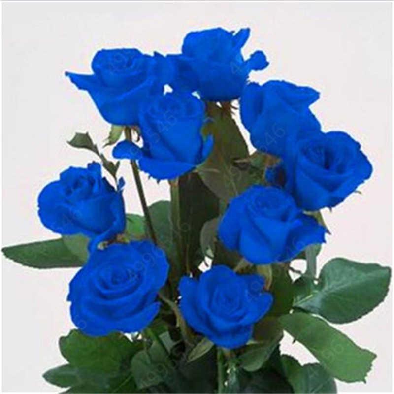 500 pcs mixed Íris Holland Raro bonito Rose Flor bonsai Para Casa Jardim Flor Rara planta 24 cor do arco íris flor planta