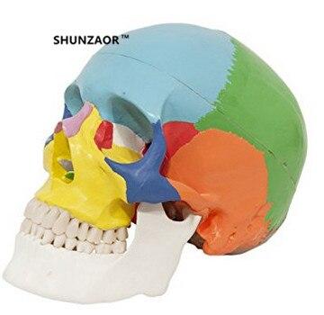 19*15*21cm   Anatomical human color  skull model 3 parts 1:1 anatomical medical teaching skeleton