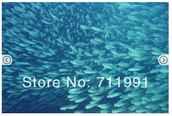 Free shipping Sardine Run Wallpaper Mural