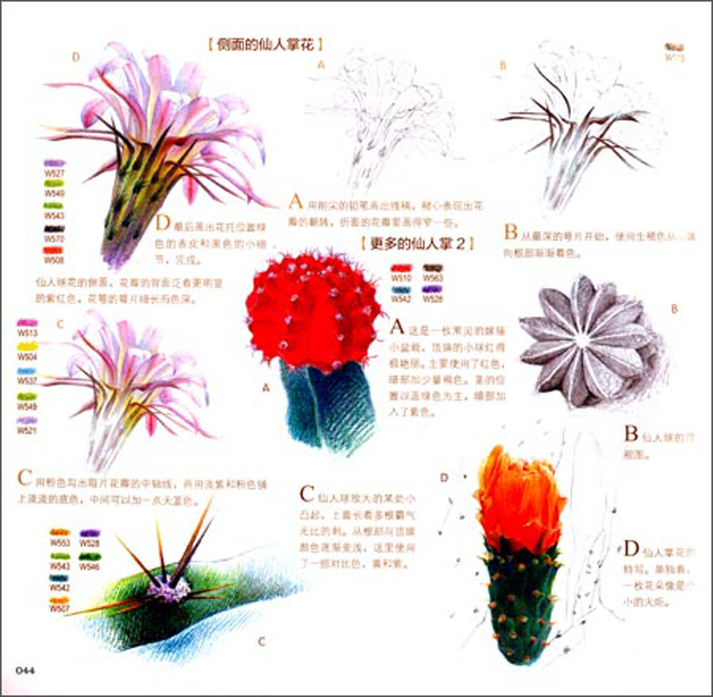 Chinese Color Pencil Drawing Flower Kapok Cactus Lily Orchid Art ...