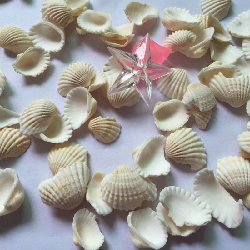 Home Decoration Natural Bottom Sea Bird Conch Tail Clam Sand Decoration Shell Aquarium