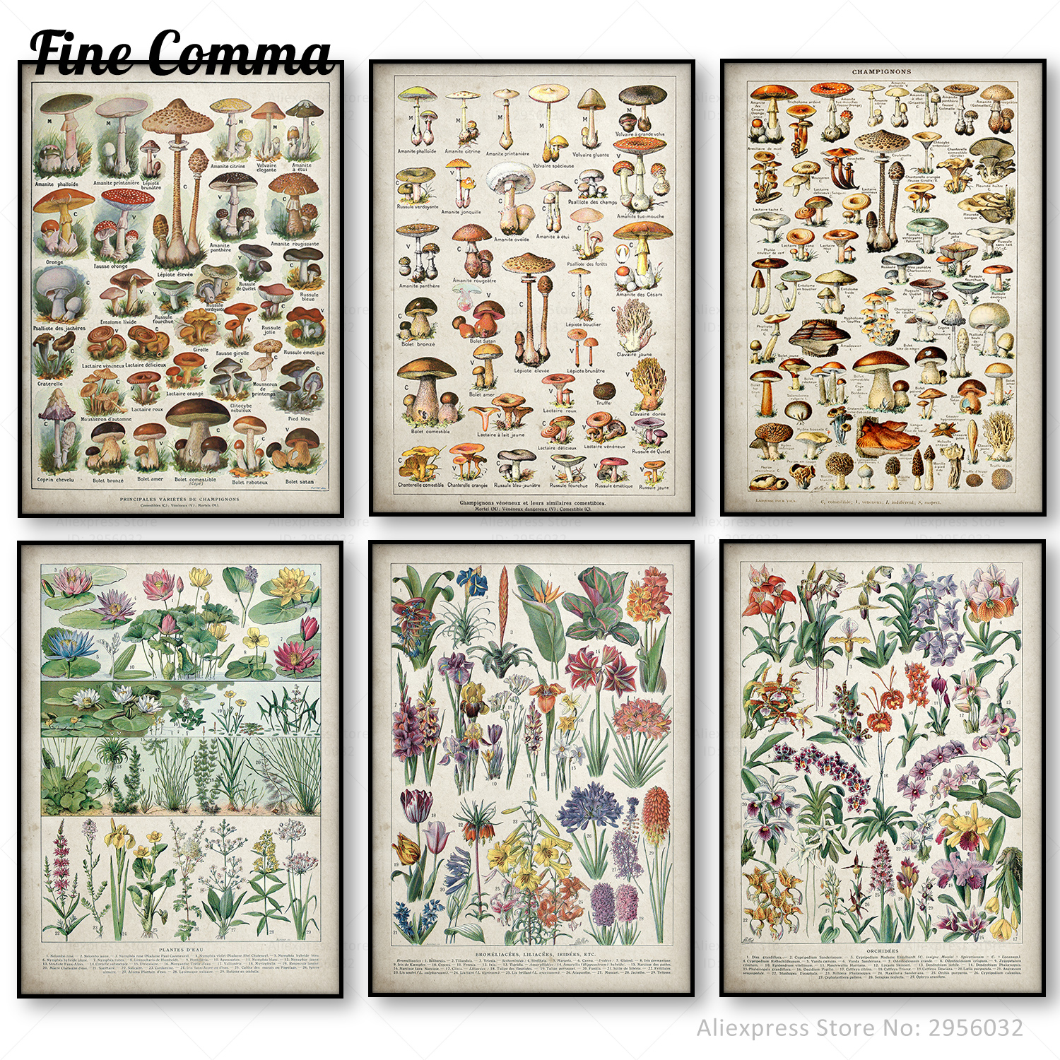 Botanical Educational Poster Mushrooms Champignons Identification Reference Chart Diagram Illustration Wall Art Canvas Painting