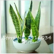 Compare Prices on Pots Indoor Plants- Online Shopping/Buy Low ...