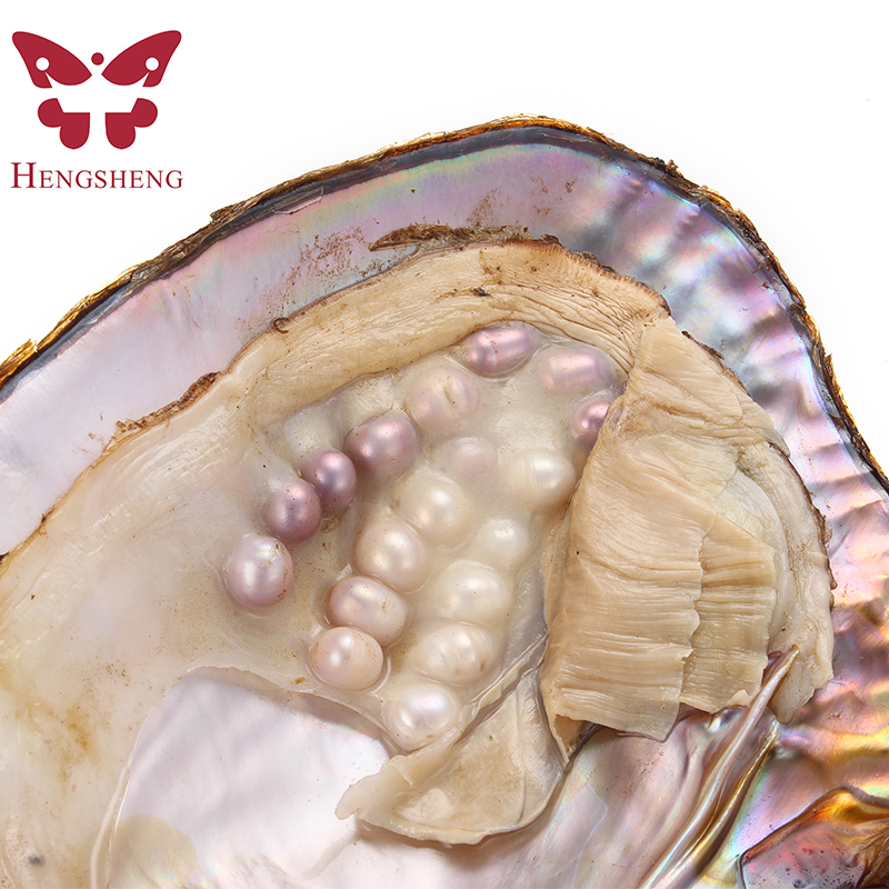 Wholesale 3pcs Big Freshwater Pearl Oyster With Many Pearls, 17-20cm Length Natural Mussel In Vacuum Packaging