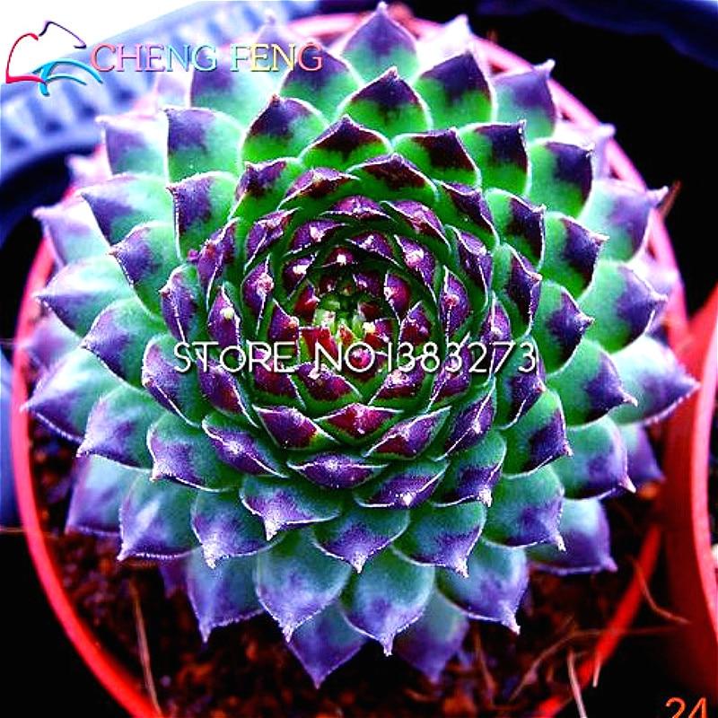200pcs/bag Mix Succulent Seeds Lotus Lithops Pseudotruncatella Bonsai Plants Seed For Home Garden Flower Pots Planters Semillas