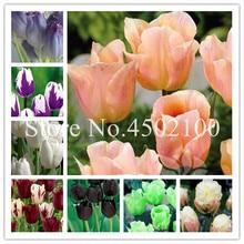 Big Sale! 20 Pieces/bag Rainbow Tulip Bonsai, Tulipa Gesneriana,Potted Plants, Planting Seasons, Flowering Plants Beauty Garden