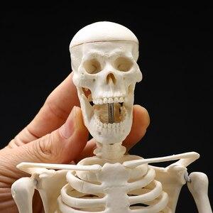 Image 3 - High Quality 45CM Human Anatomical Anatomy Skeleton Model Medical Learn Aid Anatomy human skeletal model Wholesale Retail