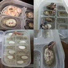 14 Slots Reptile Egg Incubator For Lizard Snake Gecko Eggs Hatcher Hatching Case Plastic Breeding Box