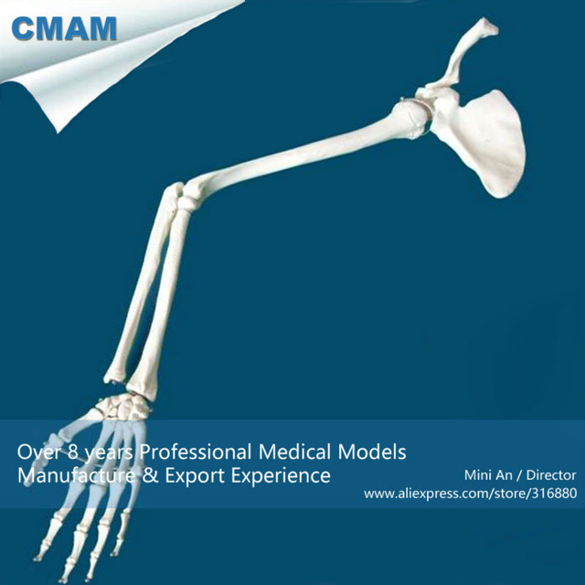 12360 CMAM-JOINT13 Human Skeleton Life-size Upper Extremity Hand Joint Model,  Medical Science Anatomical Models 1 2 life size knee joint anatomical model skeleton human medical anatomy for medical science teaching