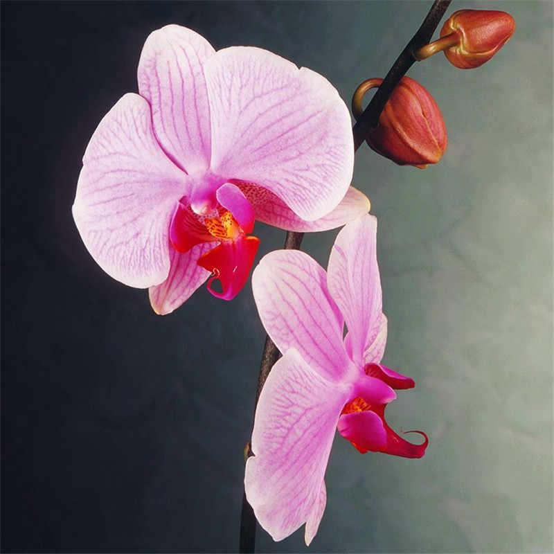 Для выращивания дома, на балконе офисные редкая Орхидея бонсай фаленопсис Орхидея горшок для карликового дерева Новое поступление DIY садовые растения цветы бонсай 5 шт.