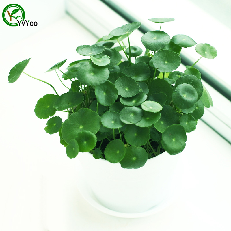 office desk plants promotion-shop for promotional office desk